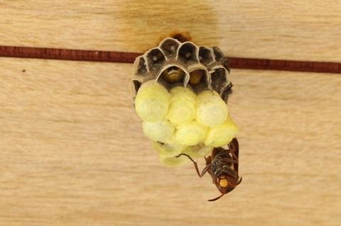 ハチ.jpg